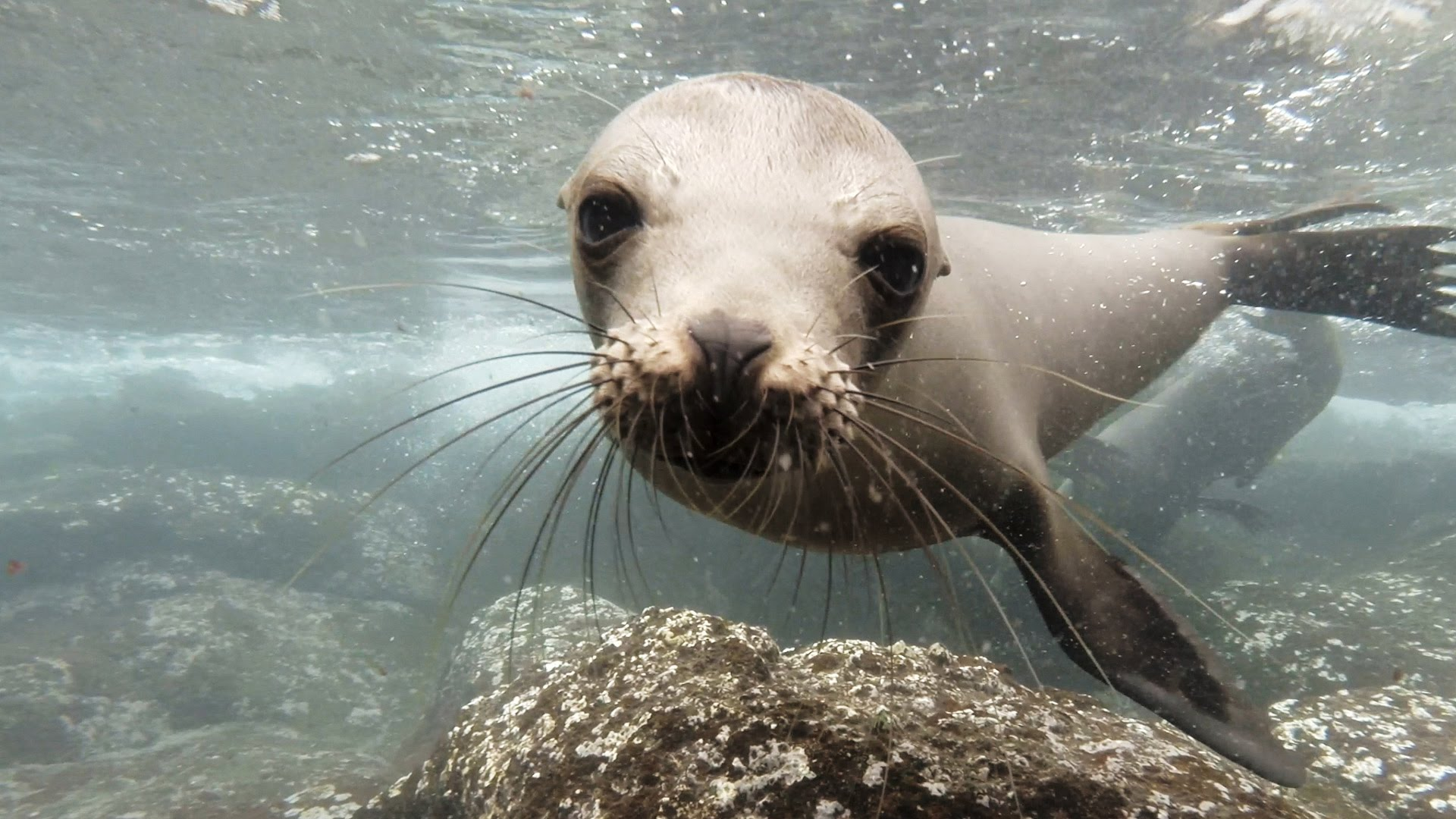 Michael Duffy Sea Lion story….the rest of the story
